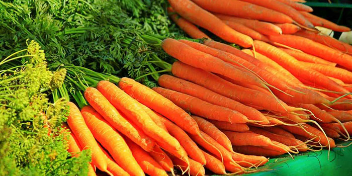 What Are The Benefits Of Growing Carrots Hydroponically?