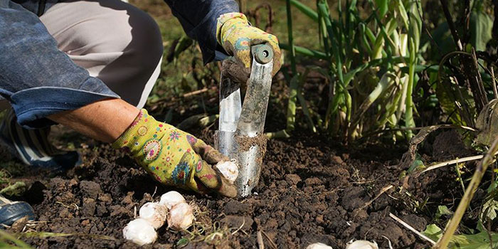 Do You Need To Winterize Your Garden?