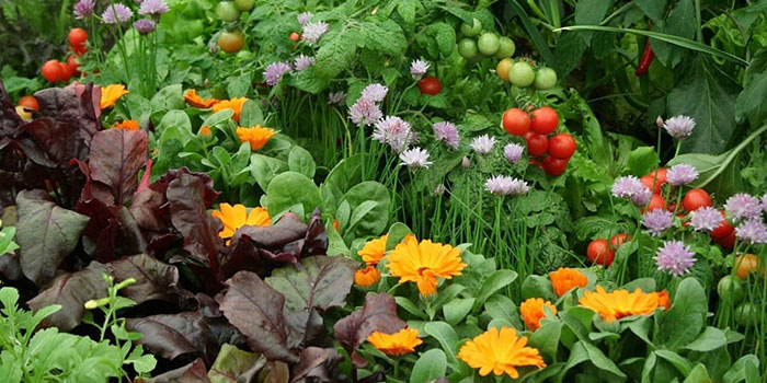 Benefits Of Companion Planting In The Garden