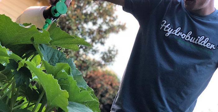 How To Foliar Spray For Pest & Disease Control