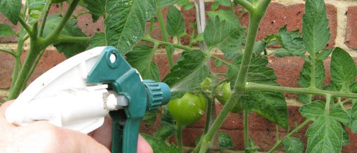 Organic Foliar Feed Recipe Example