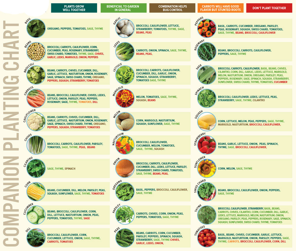 companion planting layout example