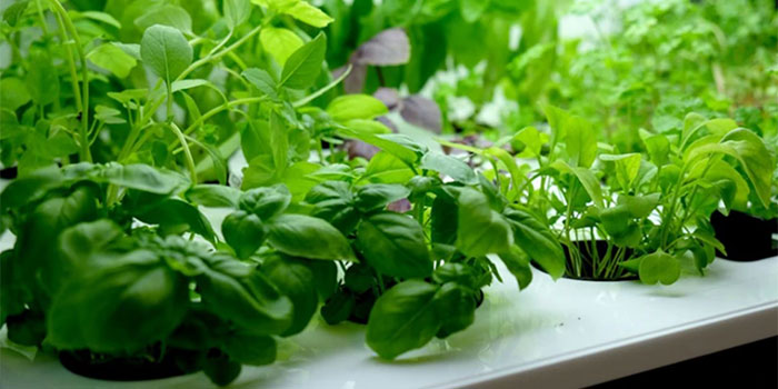 How Do I Make An Indoor Hydroponic Herb Garden?