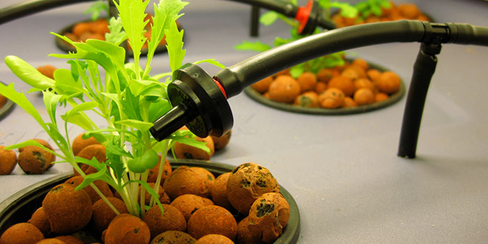 Why Start An Indoor Hydroponic Herb Garden?