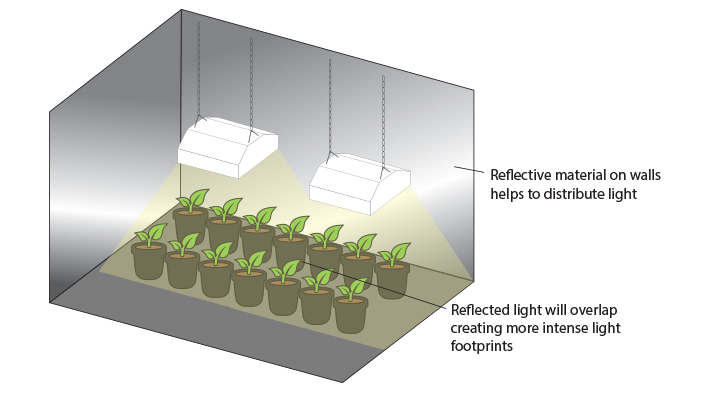 Choosing Your Grow Lights - Hydrobuilder Learning Center