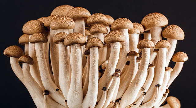 Can You Grow Mushrooms Hydroponically?