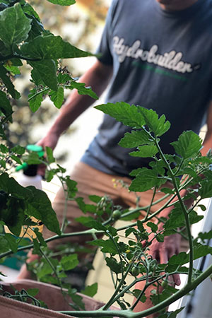 When Should You Use Garden Pesticides & Fungicides?