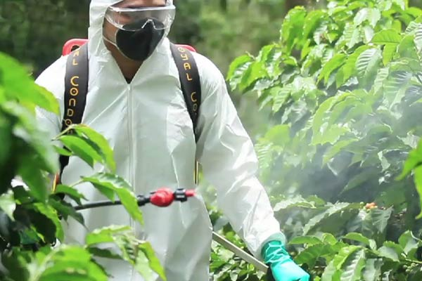 spider mite spraying