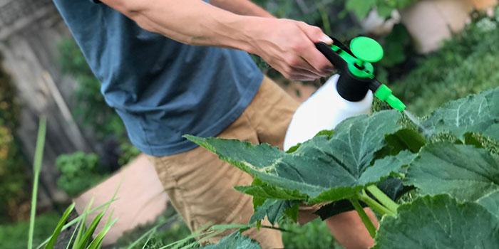 How Often Should You Foliar Spray?
