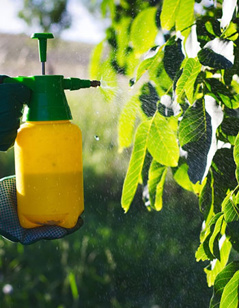 Final Tips & Recommendations Before You Foliar Spray
