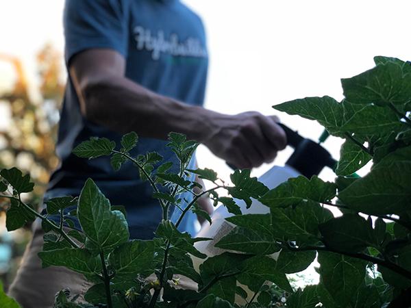 What Insecticide Kills Flea Beetles On Plants?