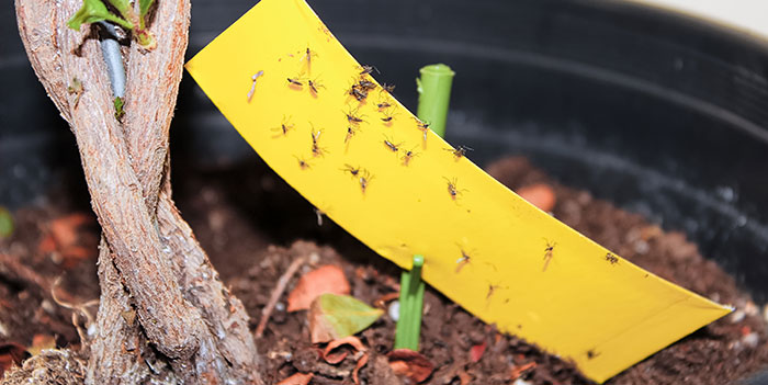 How To Prevent Springtails In The Garden