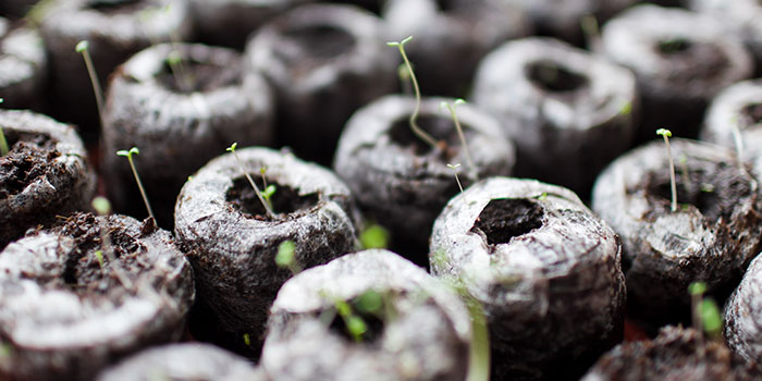 How Do You Start Hydroponic Lettuce?