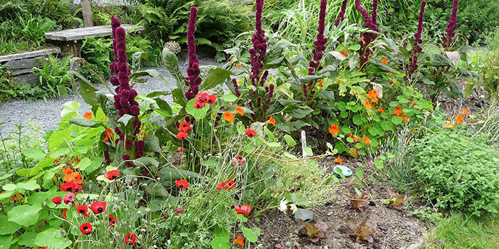 What Are The Best Garden Companion Plants For Vegetables?
