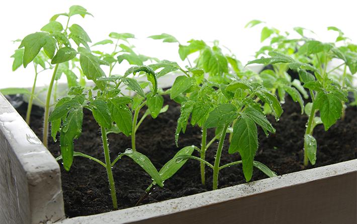 wet-plants
